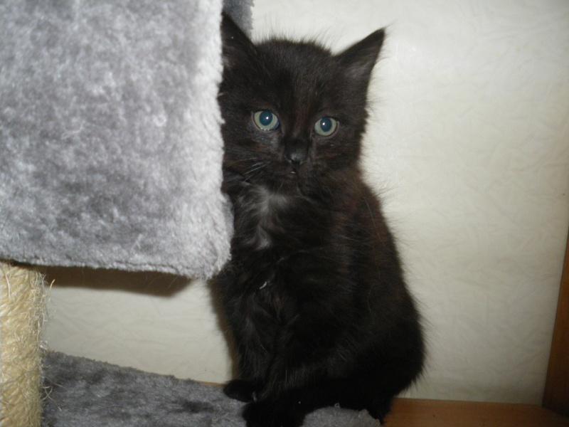 DOMINO (chaton mâle poils mi long) Imgp0318