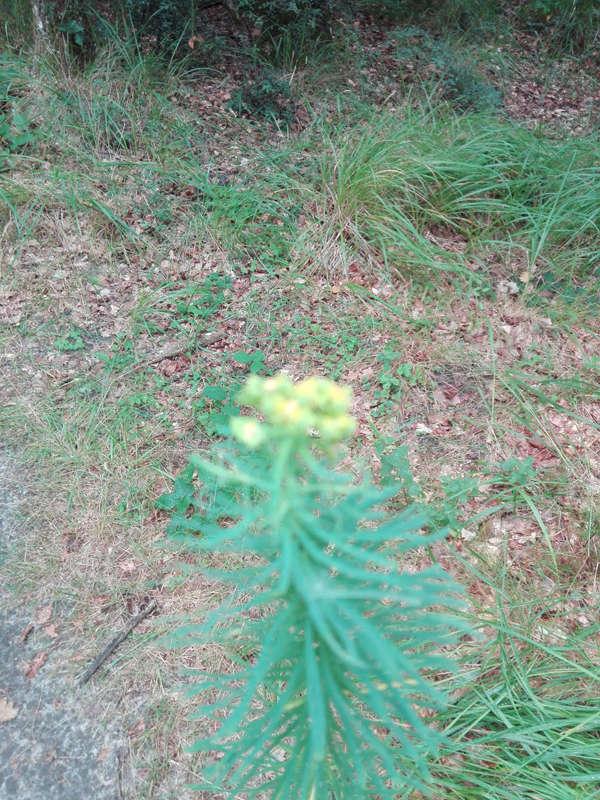 Plante inconnue Img_0110