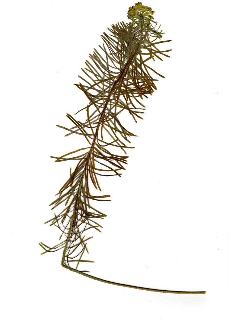 Plante inconnue Sans_t11