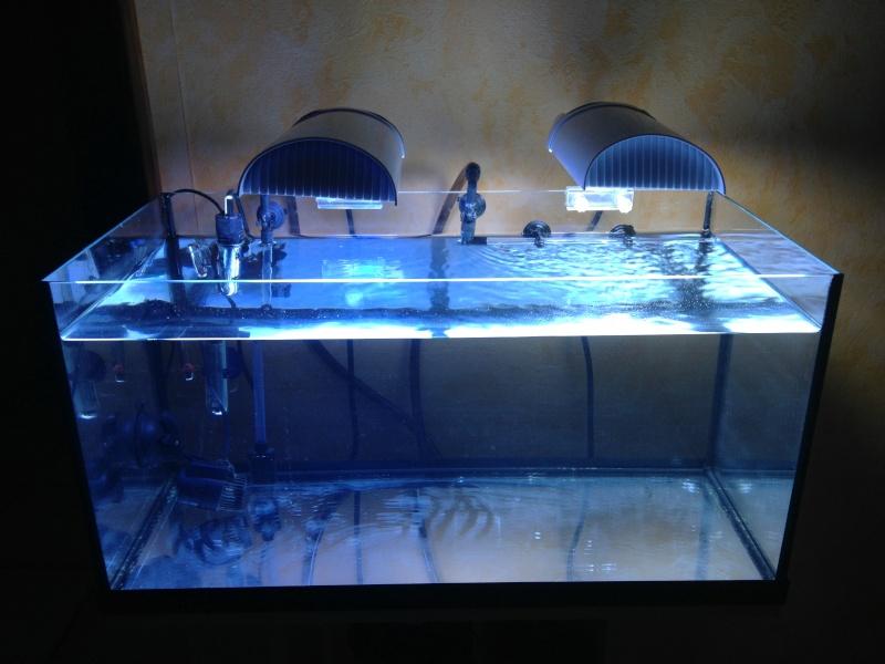 Projet aquarium de Fitzzo Photo_12