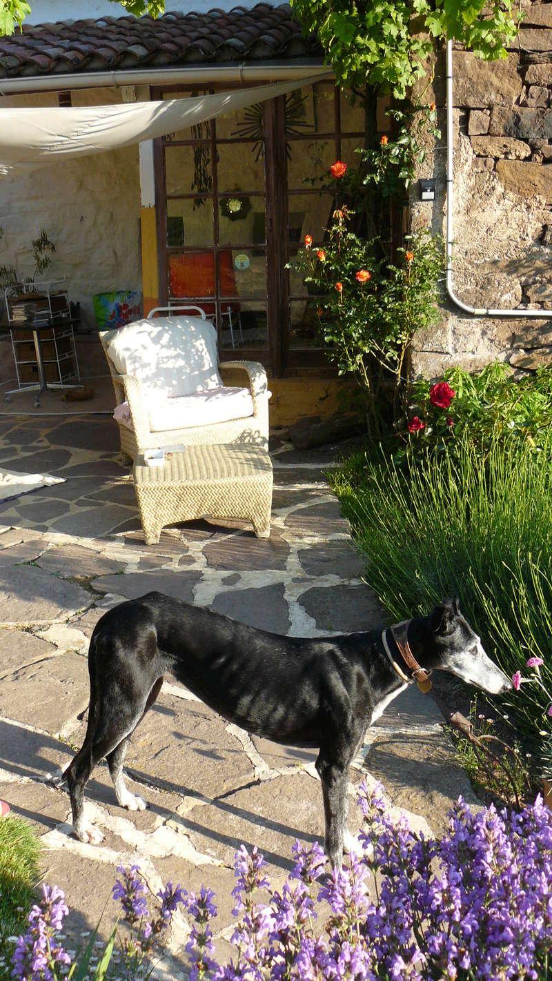 Florence Squelette de Merida à l'adoption  Scooby France    Adoptée  - Page 12 P1100310