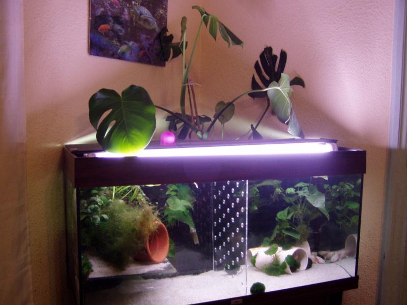 le bac des axolotls - Page 2 Forum_14