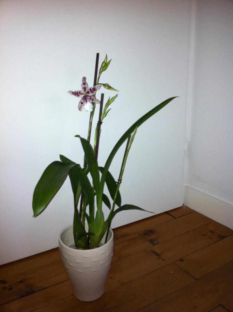 nouvelle orchidée Orchid18