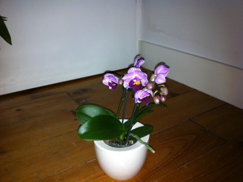 nouvelle orchidée Orchid19