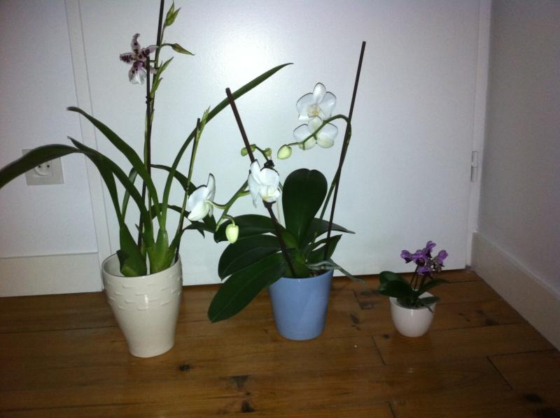 nouvelle orchidée Orchid20