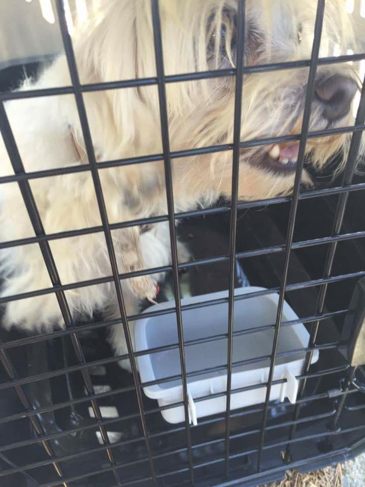 Sauvetage 6 chiens et 3 chatons <<< Lpc01171