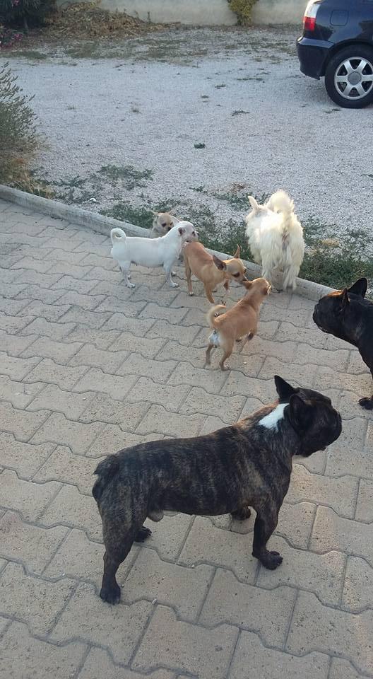 Sauvetage 6 chiens et 3 chatons <<< Lpc01178