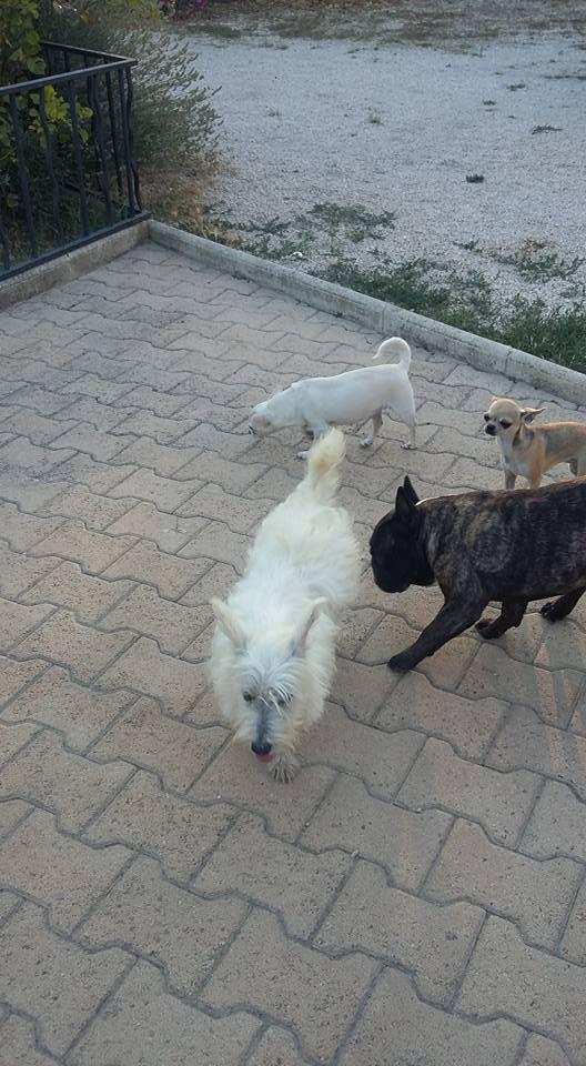 Sauvetage 6 chiens et 3 chatons <<< Lpc01180