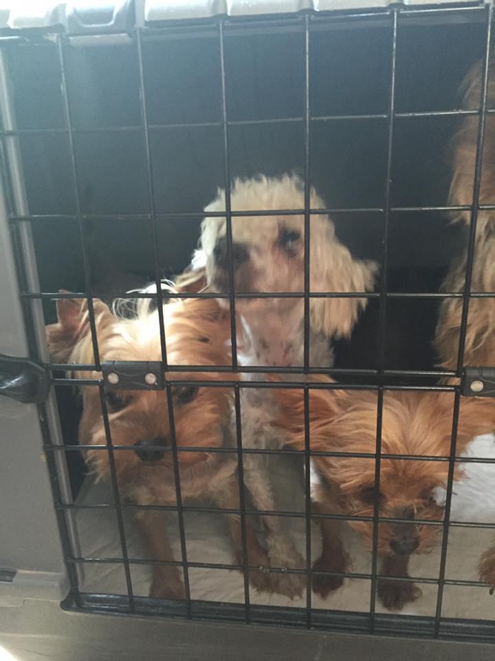 Sauvetage 13 petits chiens <<< Lpc0134
