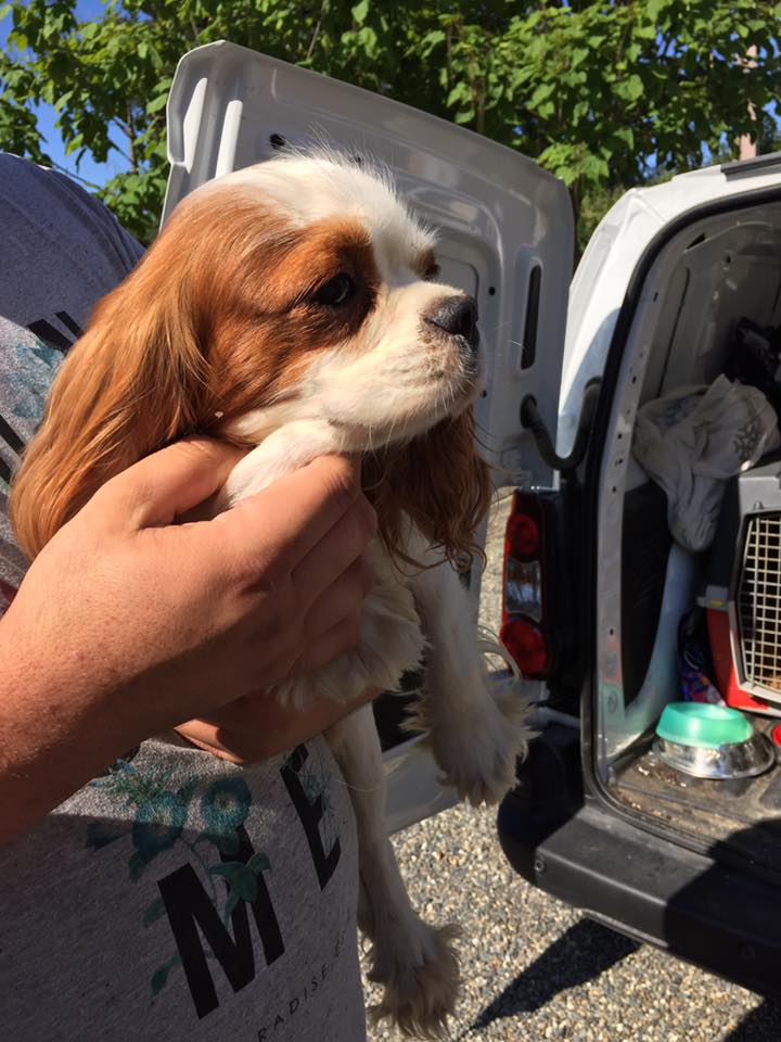 Sauvetage 13 petits chiens le 10 août 2016  Temp115