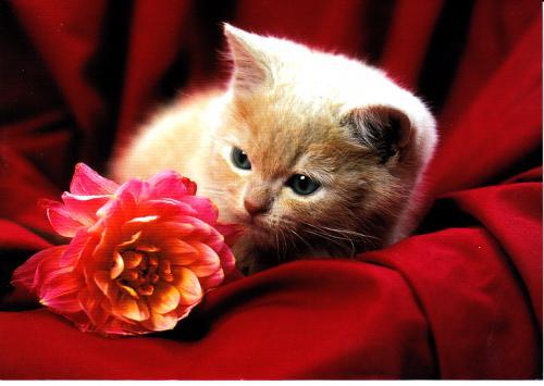 Les chats - Page 13 50077c10