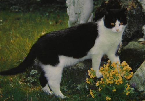 Les chats - Page 13 6bdb6310