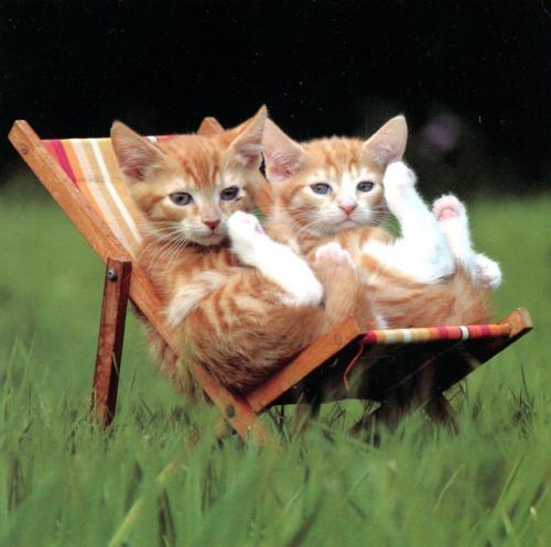 Les chats - Page 13 6fce7010