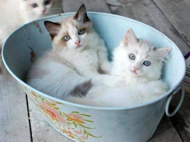 Les chats - Page 13 A45c4a10