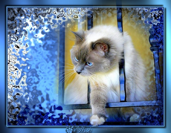 Les chats - Page 12 Ad106510