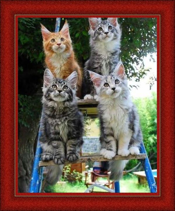 Les chats - Page 12 C14a6b10
