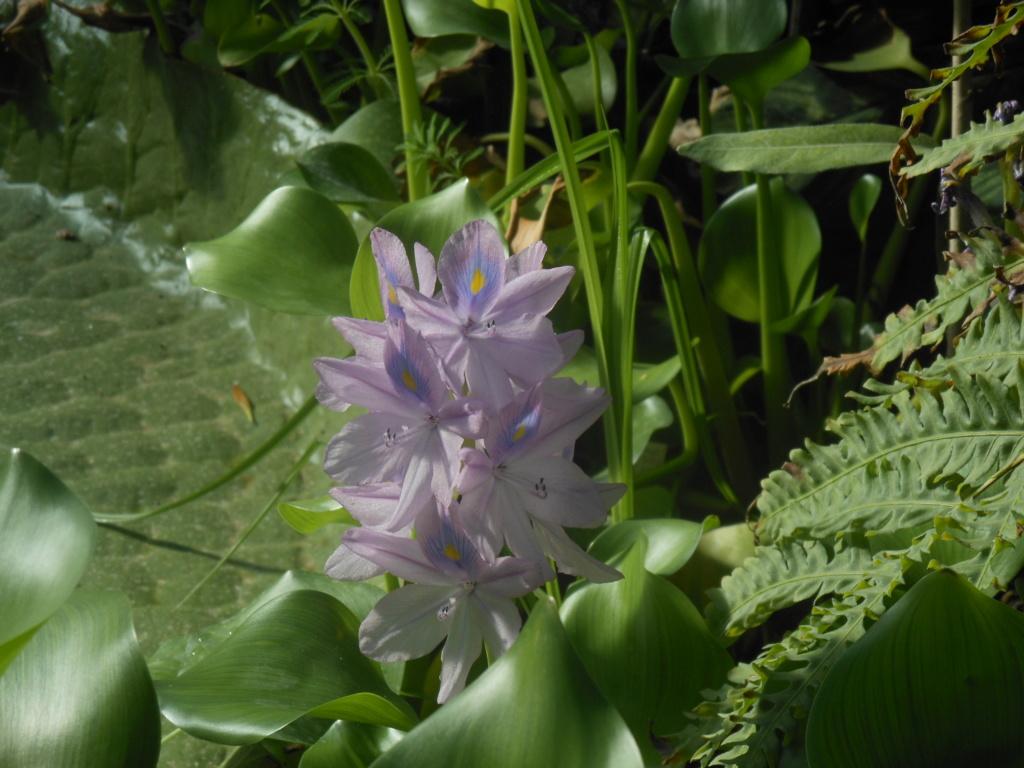 floraisons d'octobre - Page 15 Jacynt10