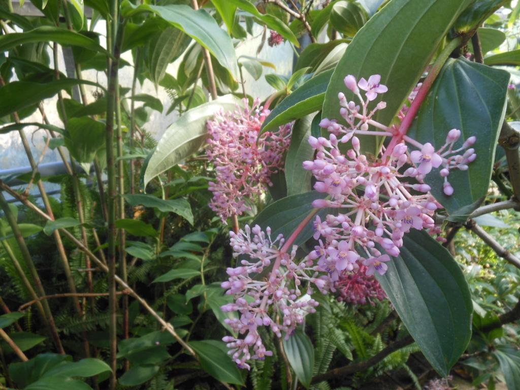 floraisons d'octobre - Page 15 Medini11