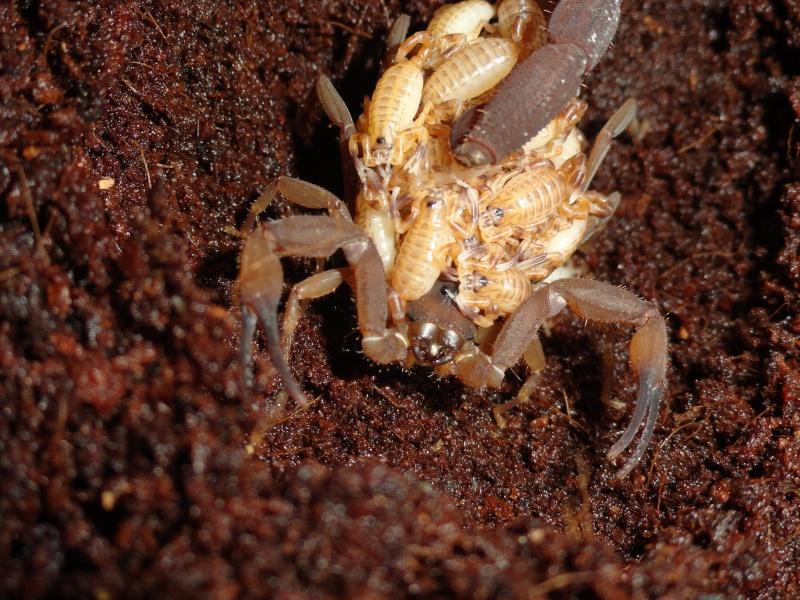 Envyizm's scorpion pictures - Page 5 Dsc00310