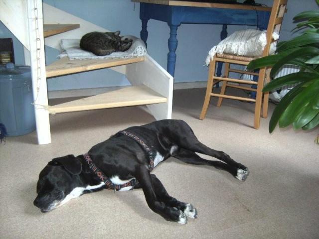 Nouvelle des chiens partis en juin 2012 Nytro_10