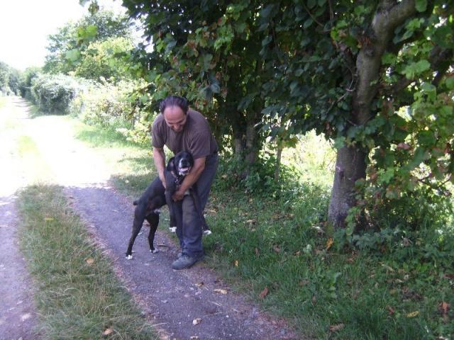 Nouvelle des chiens partis en juin 2012 Nytro_11