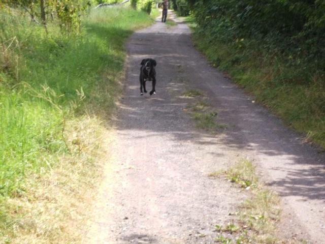 Nouvelle des chiens partis en juin 2012 Nytro_12