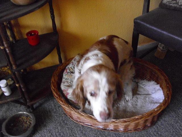 Nouvelle des chiens partis en juin 2012 Senior11