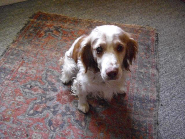 Nouvelle des chiens partis en juin 2012 Senior12
