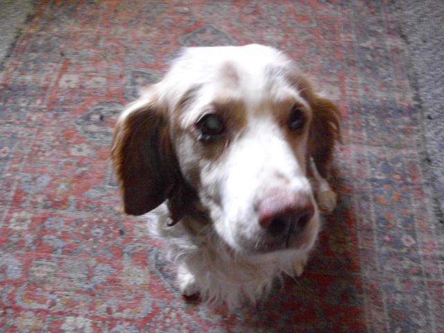 Nouvelle des chiens partis en juin 2012 Senior13