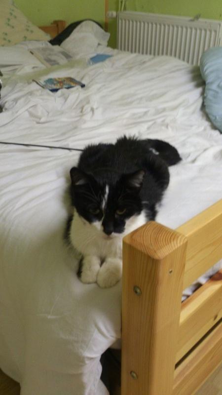 Photos des chats sauvés, avant/après - Page 2 Dsc_0112