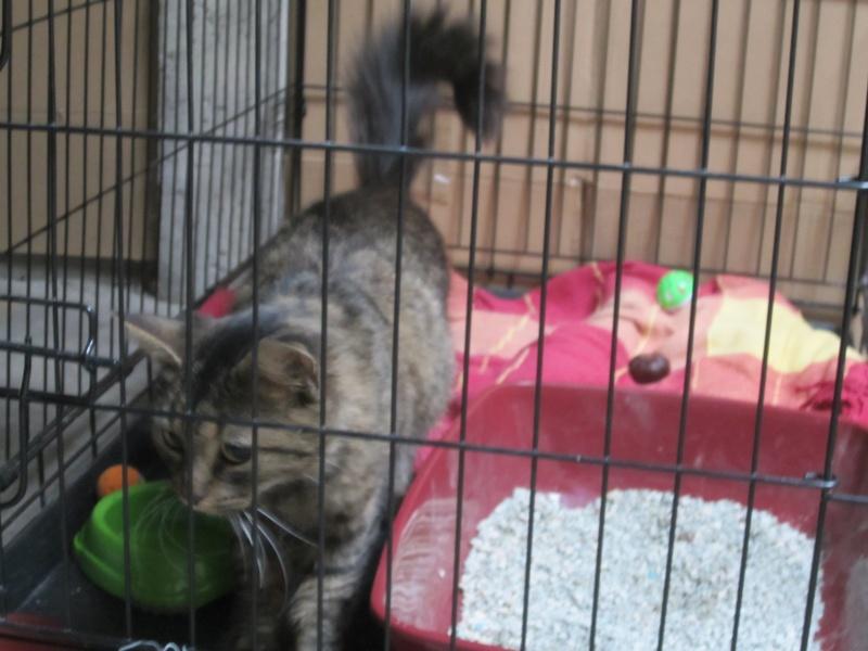 cherche FA et asso pour cette petite chatte de tourcoing Photo_50