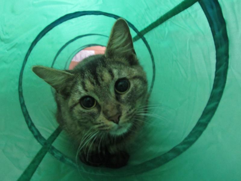 cherche FA et asso pour cette petite chatte de tourcoing Photo_58