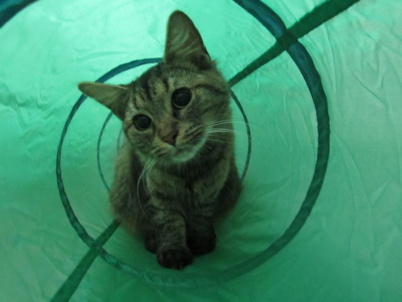 cherche FA et asso pour cette petite chatte de tourcoing Photo_59