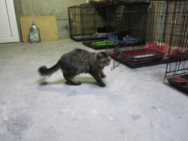 cherche FA et asso pour cette petite chatte de tourcoing Photo_60
