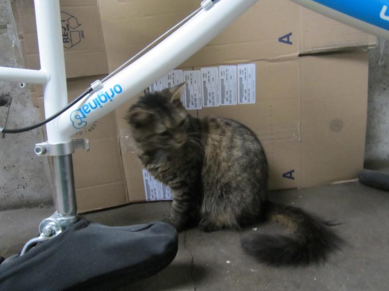 cherche FA et asso pour cette petite chatte de tourcoing Photo_61