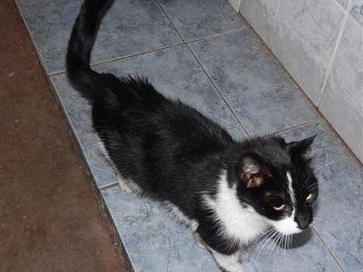 Photos des chats sauvés, avant/après - Page 2 Sam_0810