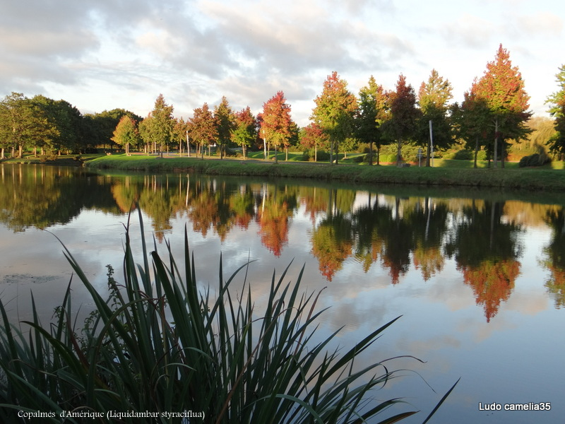 couleurs d'automne - Page 2 Dsc00910
