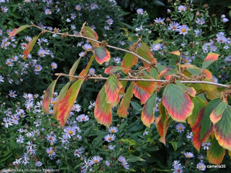 couleurs d'automne - Page 2 Dsc01510