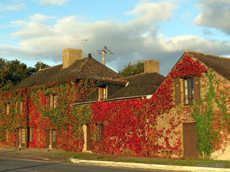 couleurs d'automne - Page 2 Dsc01710