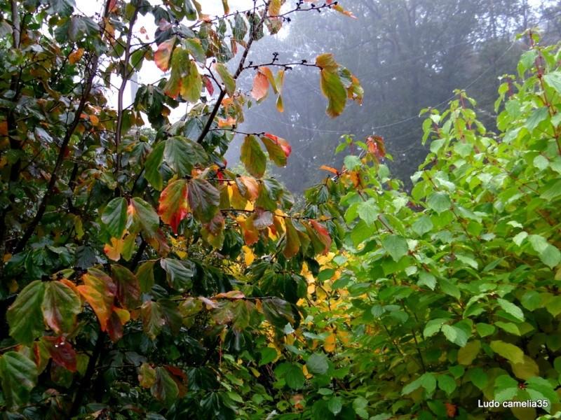 couleurs d'automne - Page 2 Dsc04912