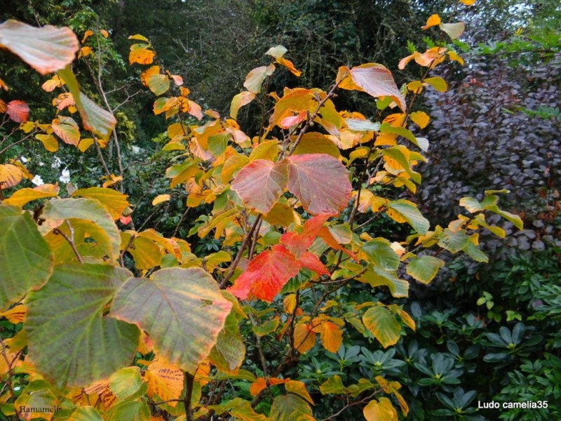 couleurs d'automne - Page 2 Dsc05110