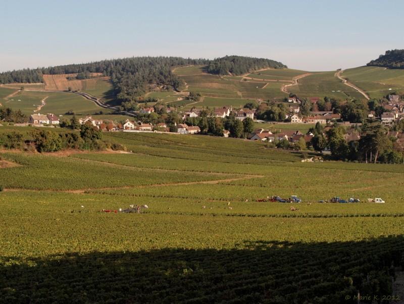 Vendanges en Bourgogne P9212916