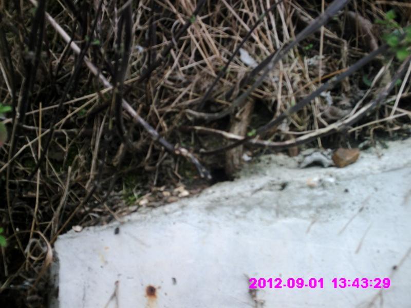 Eel Trap results 2012 - Page 7 Crim0033