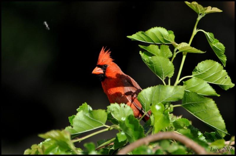 Un beau rouge ! Dsc_2410
