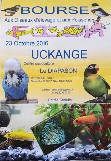 Bourse à Uckange(57)- 23 octobre 2016 aux poissons & oiseaux 14193610