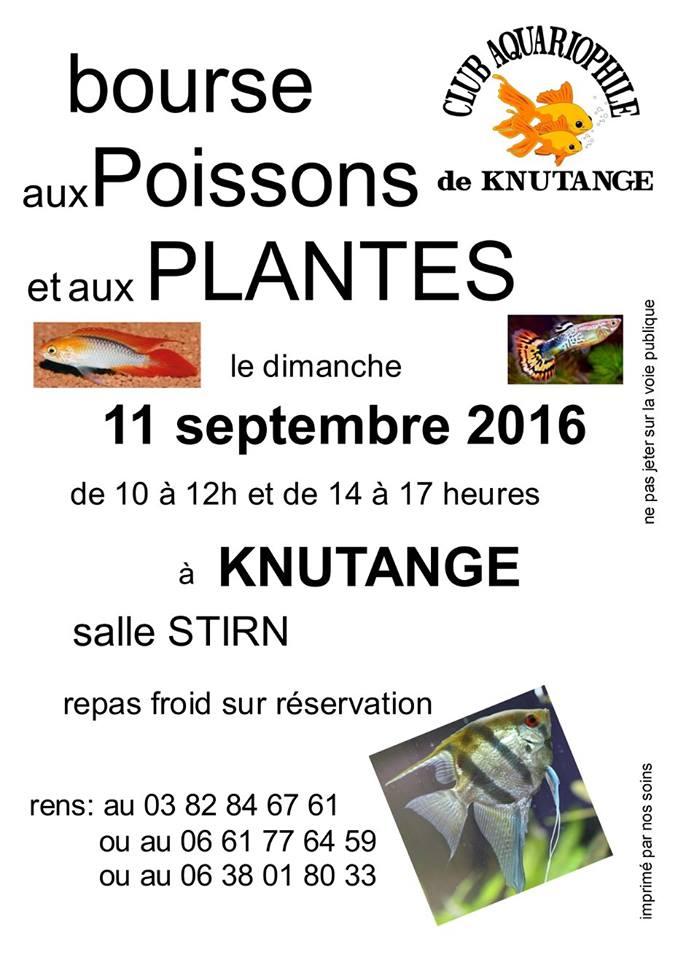 Bourse à Knutange (57) - 11 septembre 2016 Photo_10