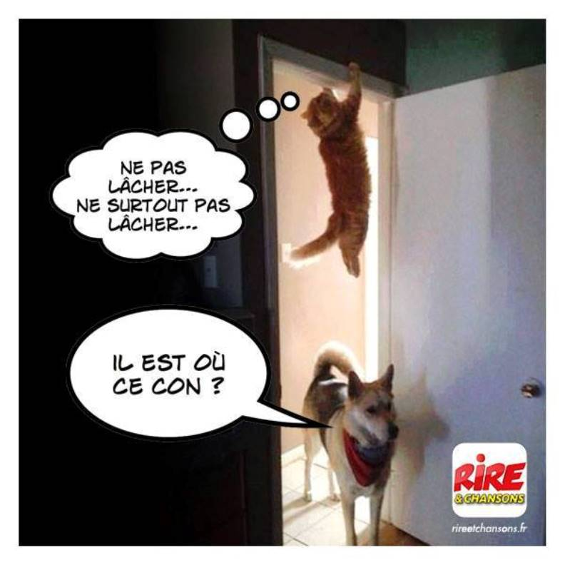 humour - Page 39 Chat_c10
