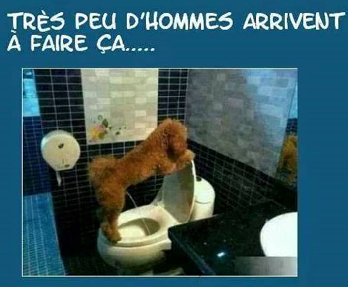 humour - Page 39 Chien_10