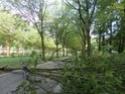 Après l'orage... Sam_5411