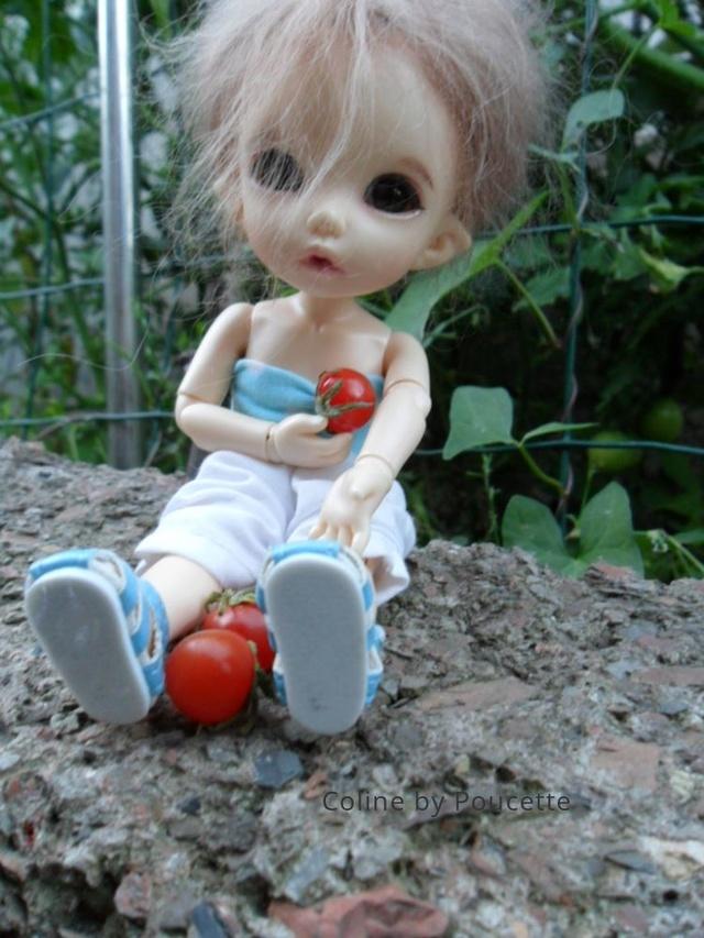 [pkf ante] Tite sortie au jardin, à la fraîche. Sg26dc11